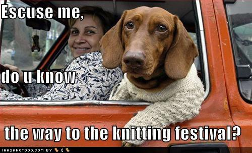 Funny-dog-pictures-dog-is-going-to-the-knitting-festival