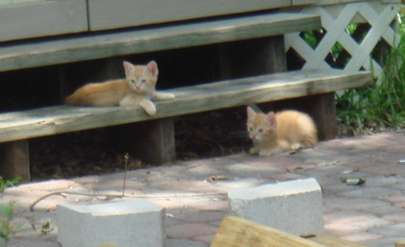 Kitties2
